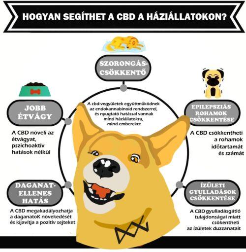 CBD hatásai a kisállatokra